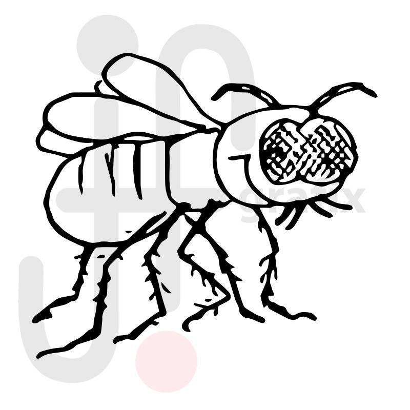 Fliege 002