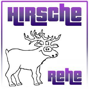 Hirsche / Rehe