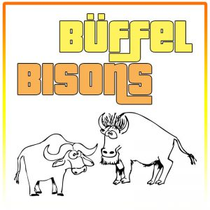 Büffel / Bisons
