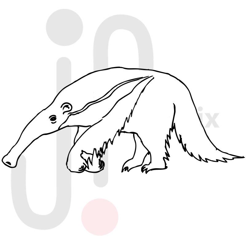 Ameisenbär 002