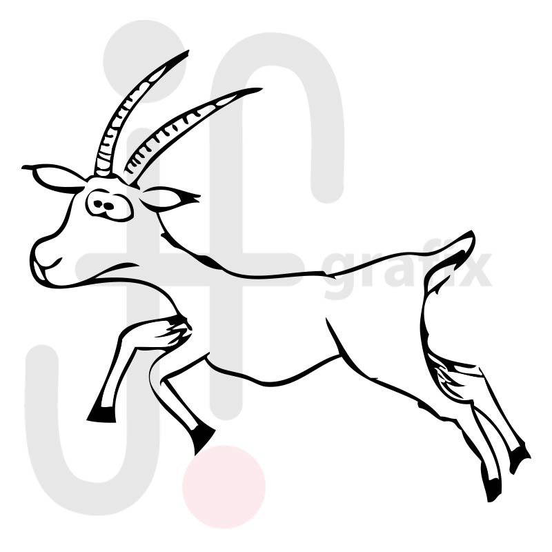 Antilope 001