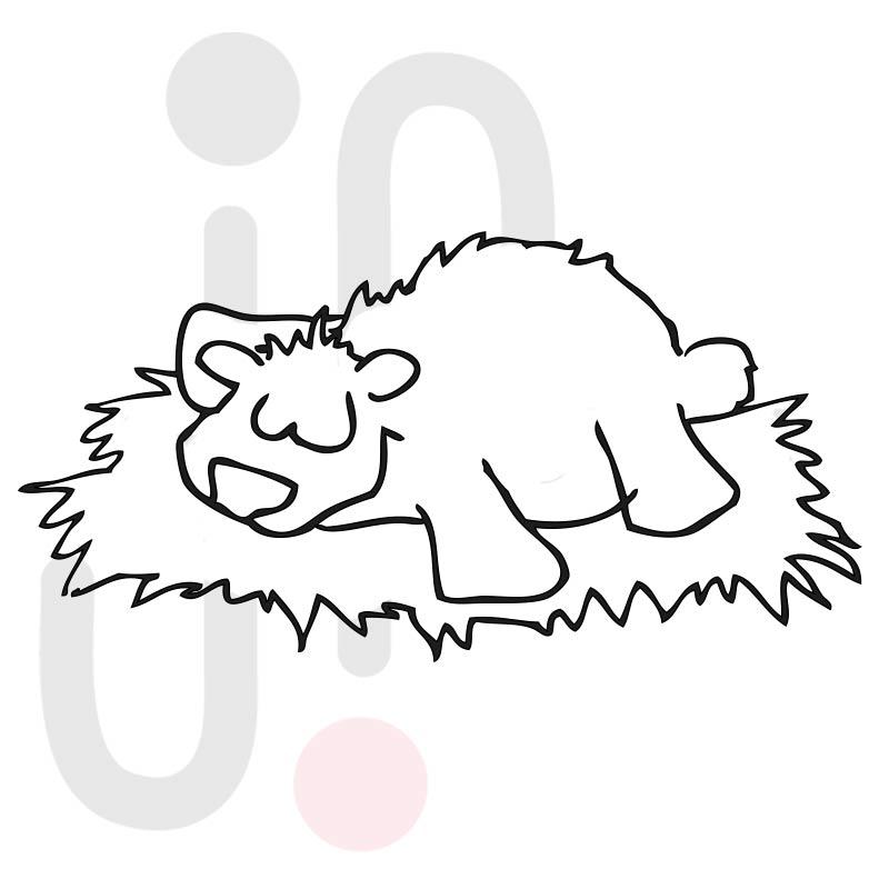 Bär 006