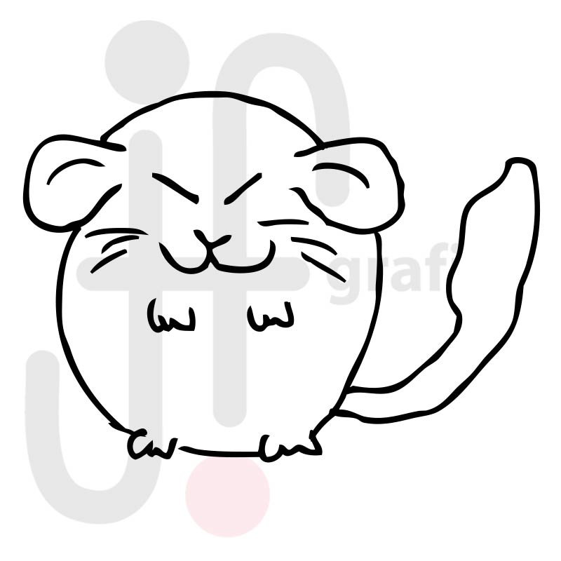 Chinchilla 004