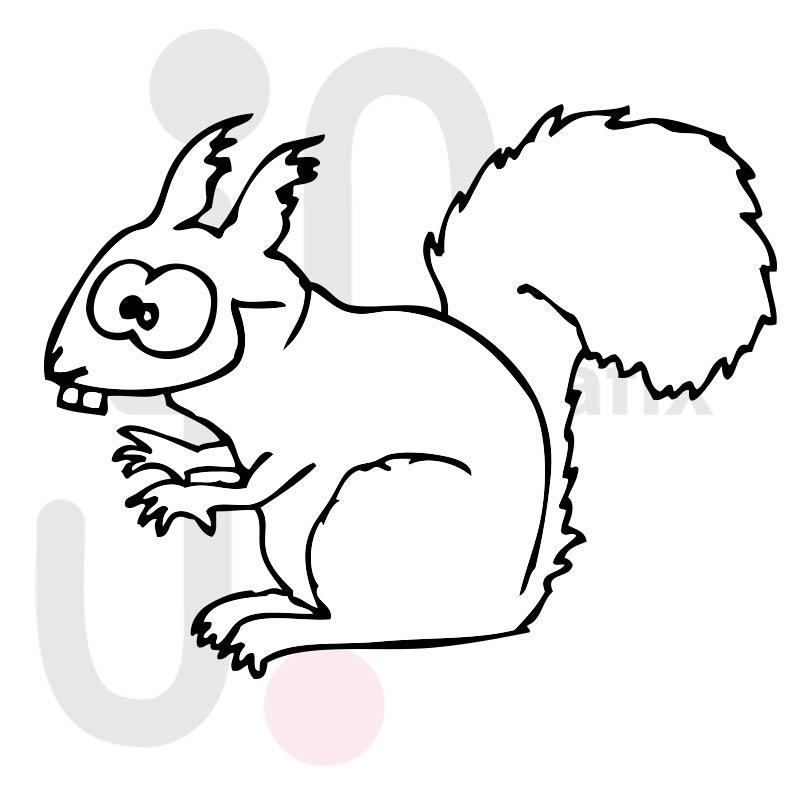 Eichhörnchen 001