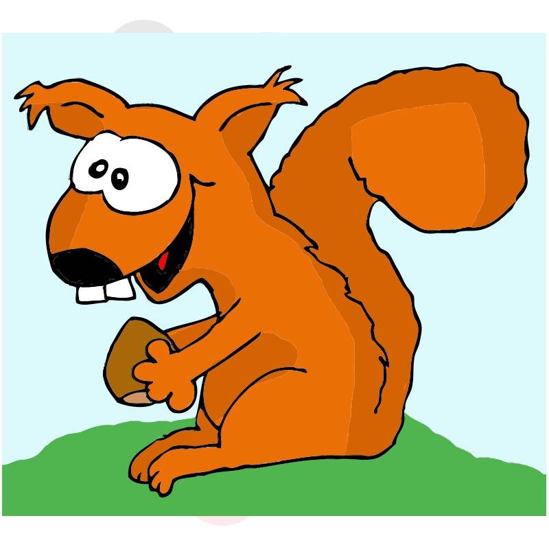 Eichhörnchen 004 farbig