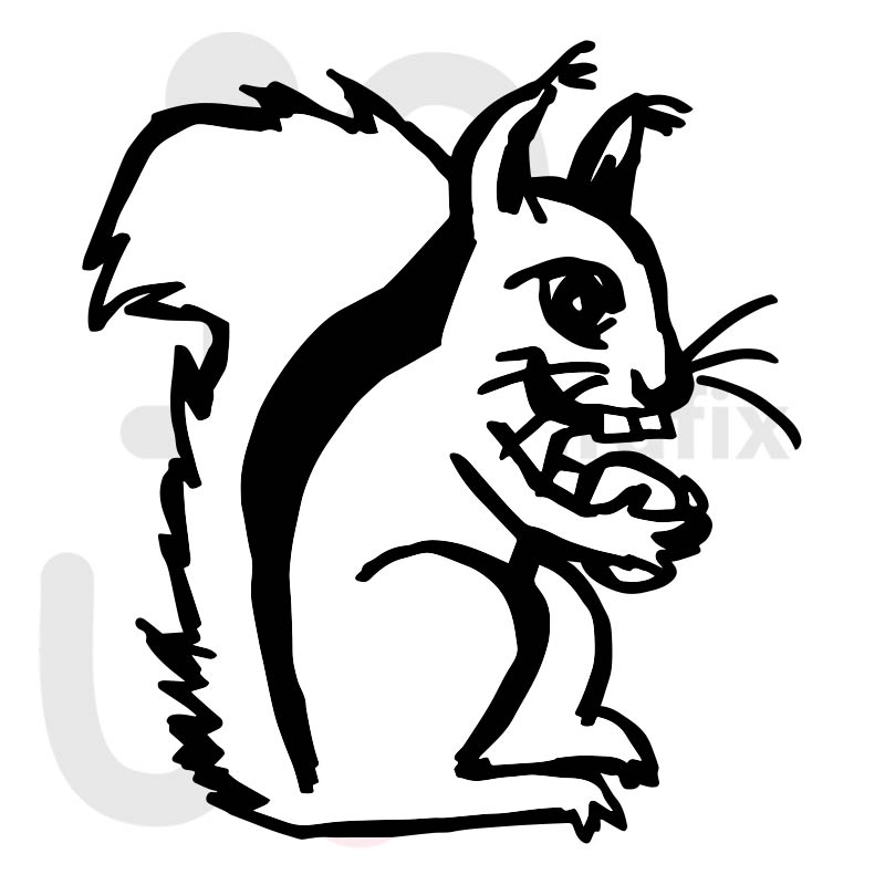 Eichhörnchen 008