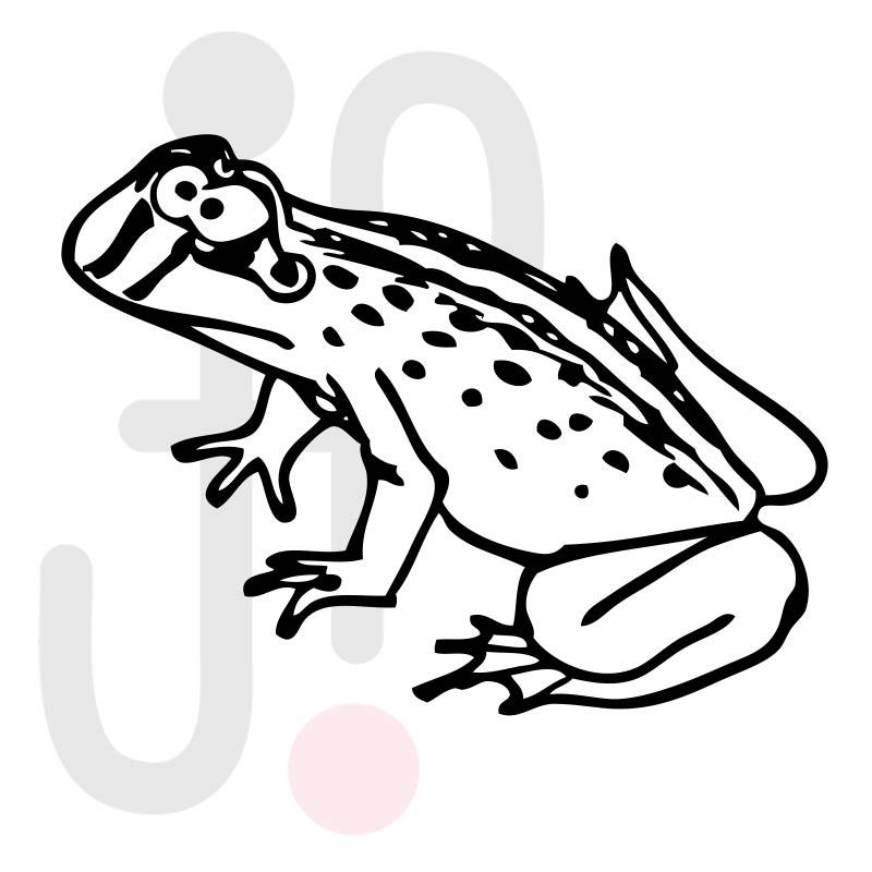Frosch 009