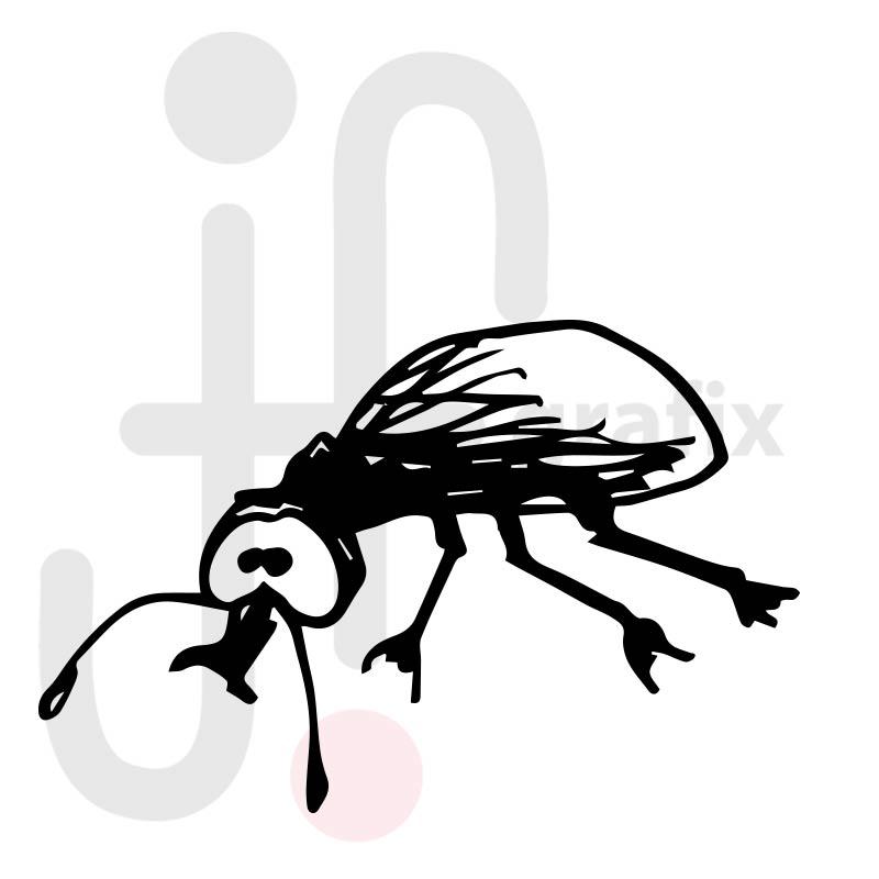 Käfer 006
