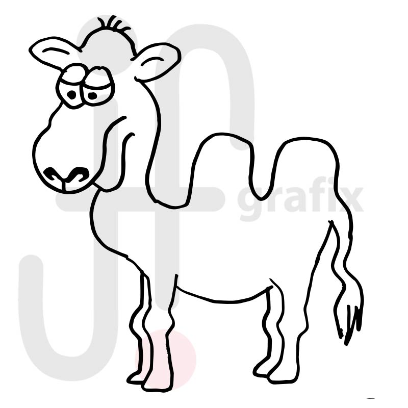 Kamel 002