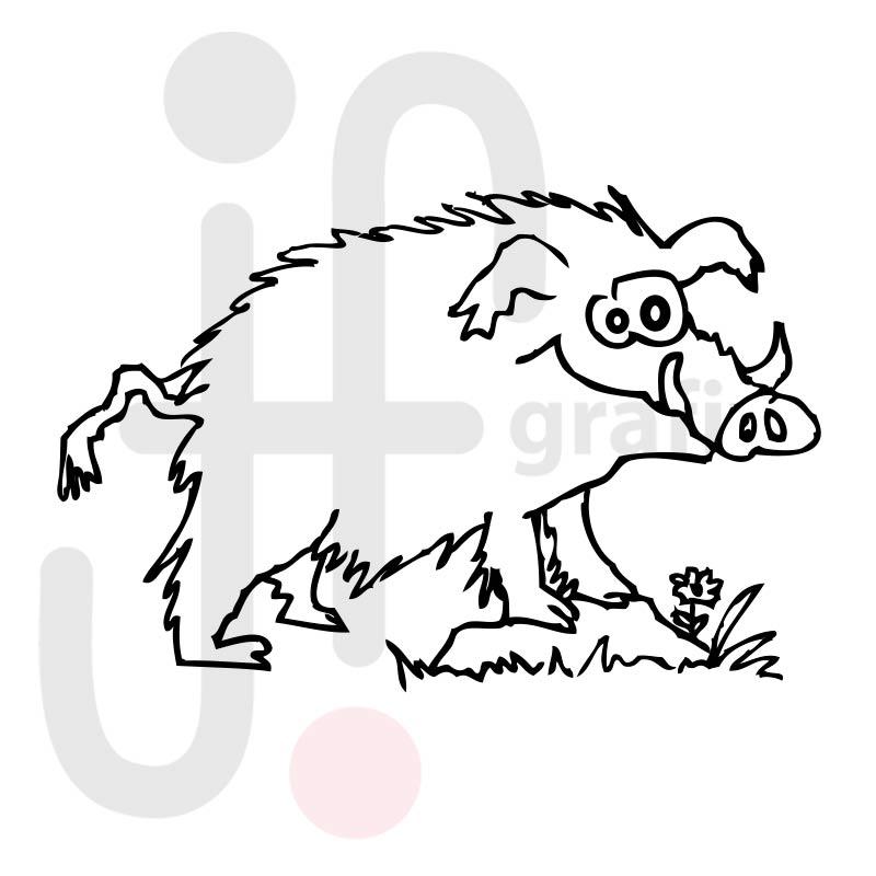 wildschwein 001  tierisch gut tierbilder