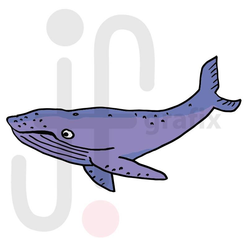 Wal 003 farbig
